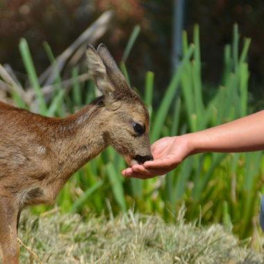 Excursiones cerca de Madrid naturaleza e interacción con animales